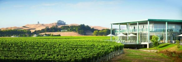 elephant-hill-winery-is-doing-free-shipping-and-a-special-code-for-all-m2-readers-te-awanga-sauvignon-blanc-block-m2magazine.co_.nz-1024x351-m2magazine.co.nz