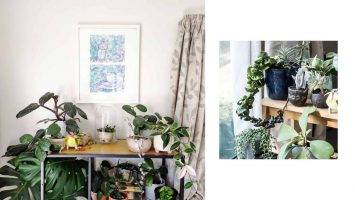 M2woman - Top 5 Houseplants & Their Rarer Counterparts To Start Your Collection